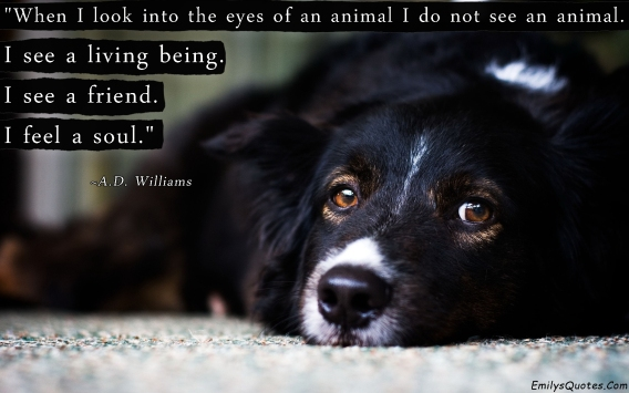 EmilysQuotes.Com-A.D.-Williams-animal-nature-living-being-friend-feelings-soul-inspirational-great