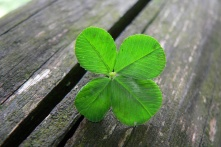 four_leaf_clover_wallpaper_028